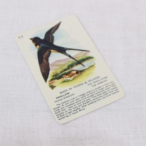 イギリスヴィンテージの鳥のカードゲームのカード表面