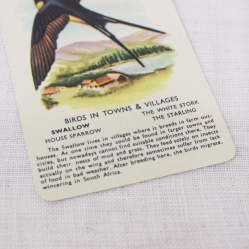 イギリスヴィンテージの鳥のカードゲームの鳥の説明