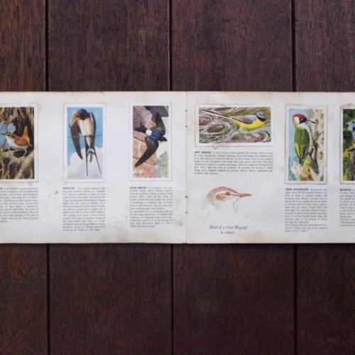 英国ヴィンテージの鳥のカードアルバム