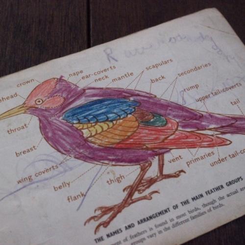 英国ヴィンテージの鳥のカードアルバムの書き込み