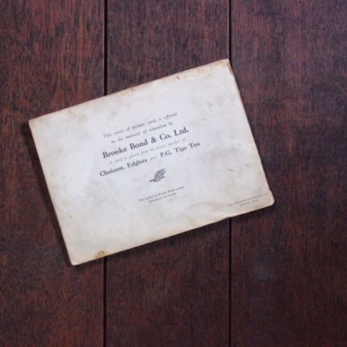 英国ヴィンテージの鳥のカードアルバム裏表紙