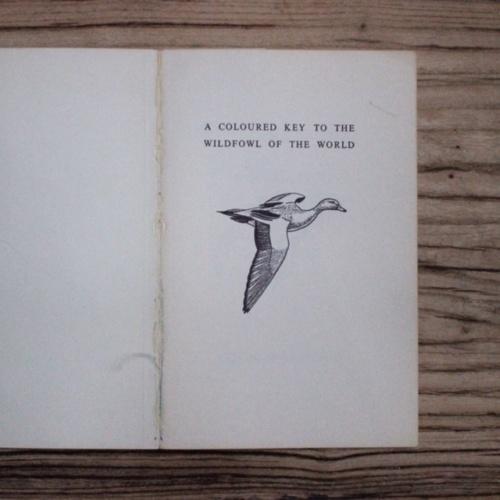 イギリスヴィンテージの鳥の本の内表紙
