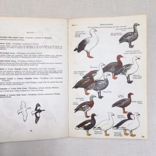 イギリスヴィンテージの鳥の本の挿画